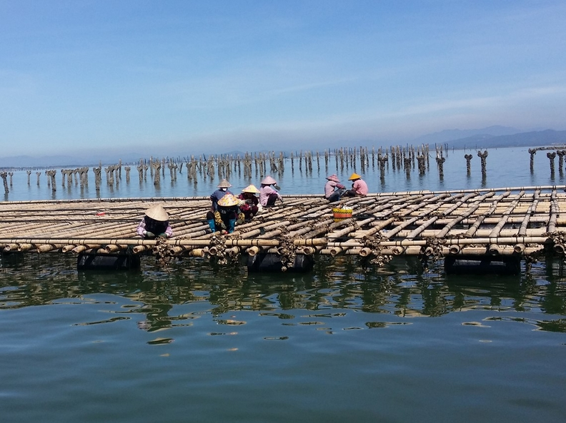 Chinese mariculture